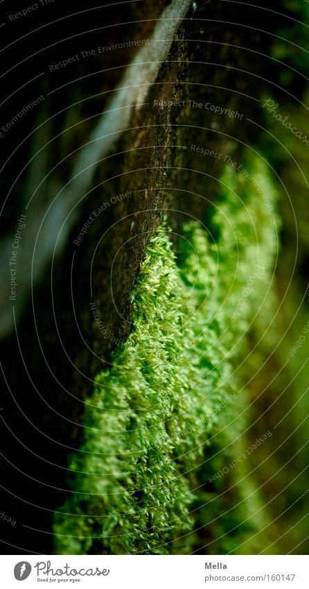 Green Wall (building) Wall (barrier) Brown Growth Moss Diagonal Seam