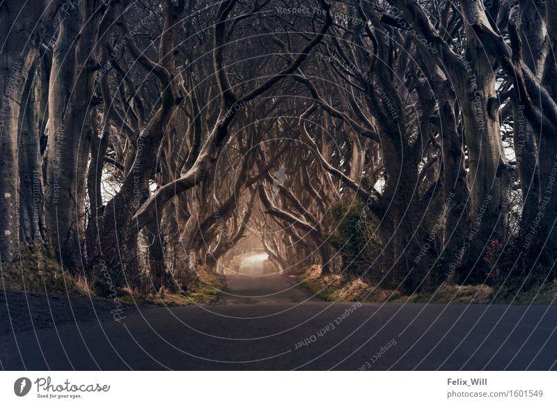 dark hedges Environment Nature Landscape Winter Bad weather Storm Tree Meadow Forest Northern Ireland Europe Village Deserted Tourist Attraction Landmark Hope
