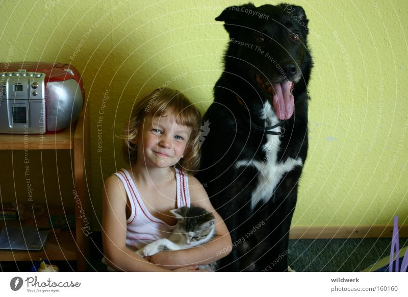 pets Dog Cat Child Black White Animal Undershirt Girl Interior shot Green Joy Trust Mammal on arm in the nursery