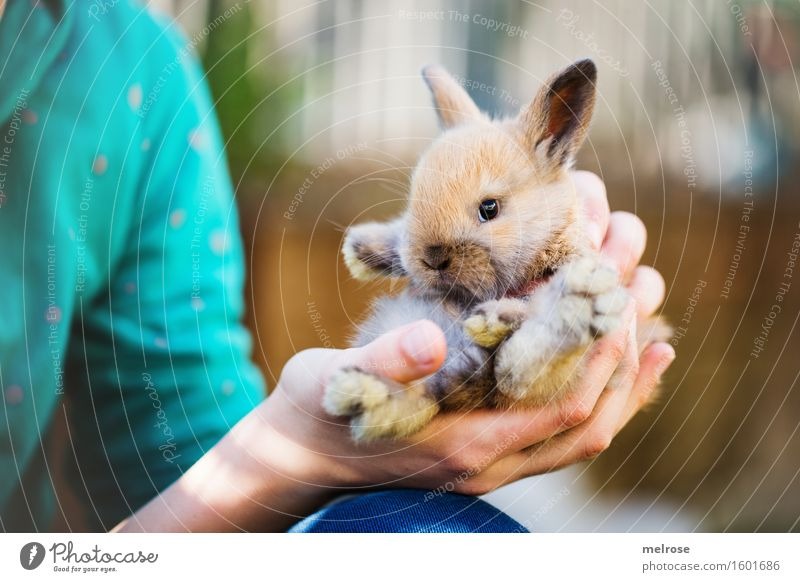 little rascal II Girl Arm Hand Fingers Shoulder 1 Human being 8 - 13 years Child Infancy Pet Animal face Pelt Paw Pygmy rabbit baby hare rodent Mammal Snout