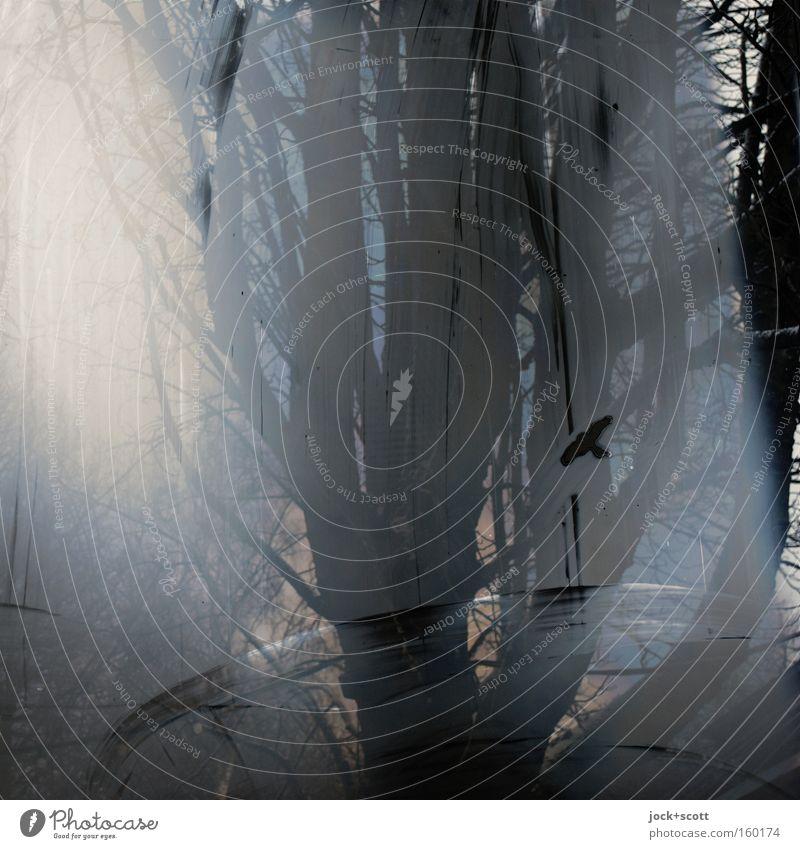 Tree Calm Animal Winter Black Dark Cold Window Environment Natural Bird Illuminate Glass Stripe Tree trunk Fluid