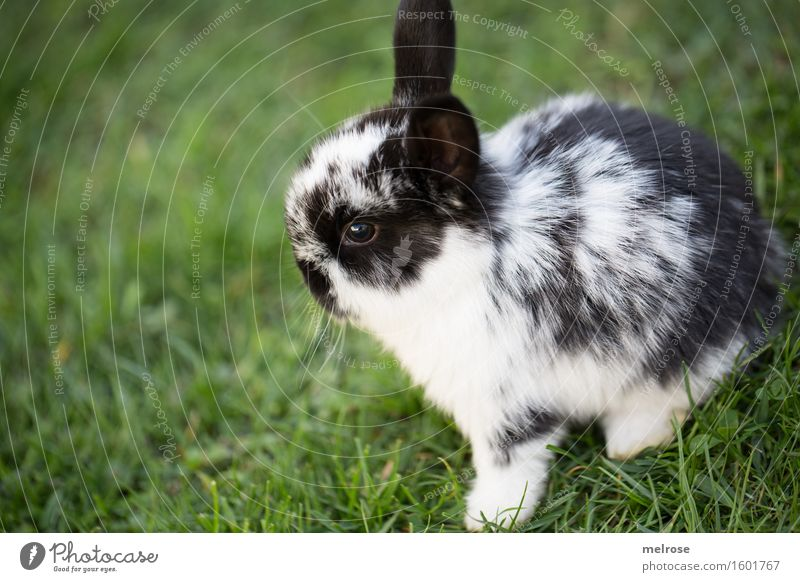 good career changer Pet Animal face Pelt Paw baby hare Pygmy rabbit Rodent Mammal hare spoon 1 Baby animal lateral entrants Relaxation Friendliness Happy