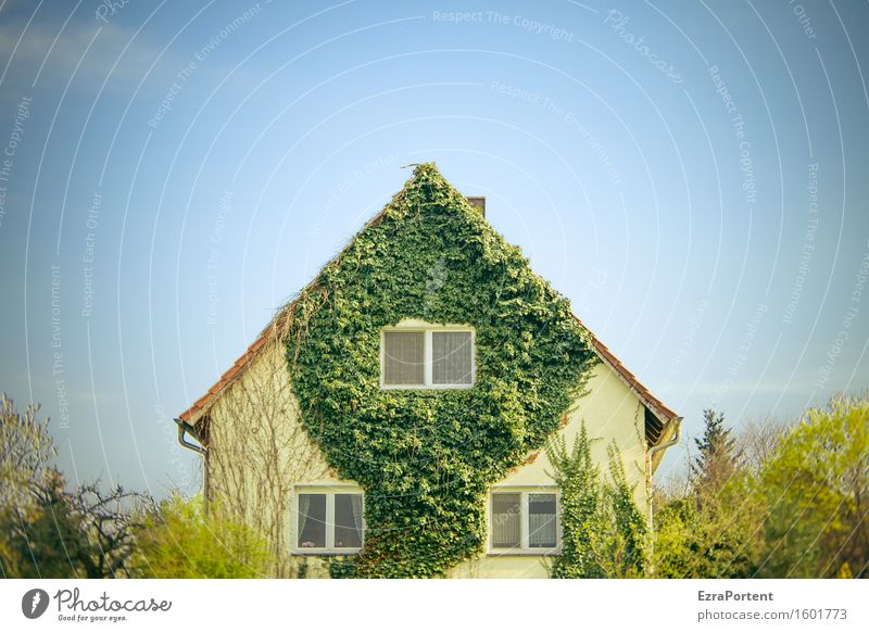 a family house Nature Landscape Plant Sky Cloudless sky Spring Climate Tree Bushes Ivy Leaf House (Residential Structure) Detached house Manmade structures