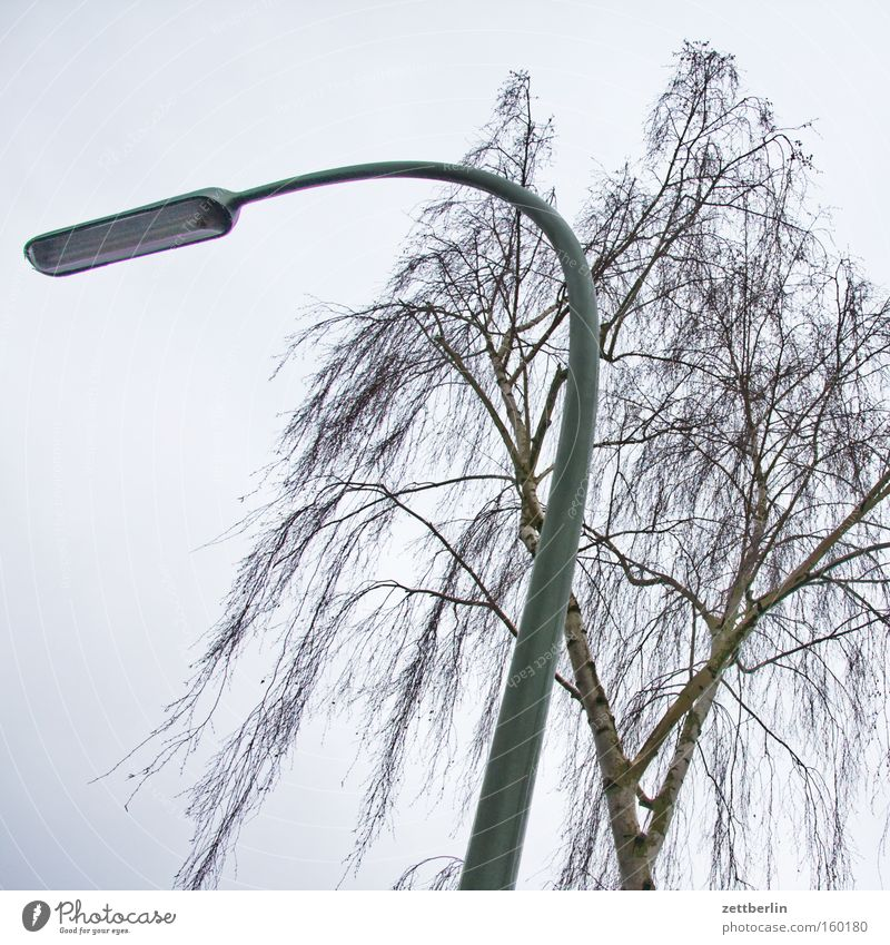 Lighting Branch Lantern Tree trunk Twig Pollen Birch tree Allergy sufferer Street lamp