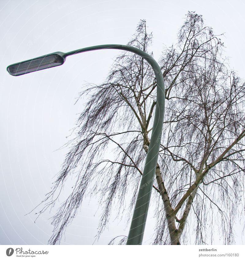 Lighting Branch Lantern Tree trunk Twig Pollen Birch tree Allergy sufferer Street lamp