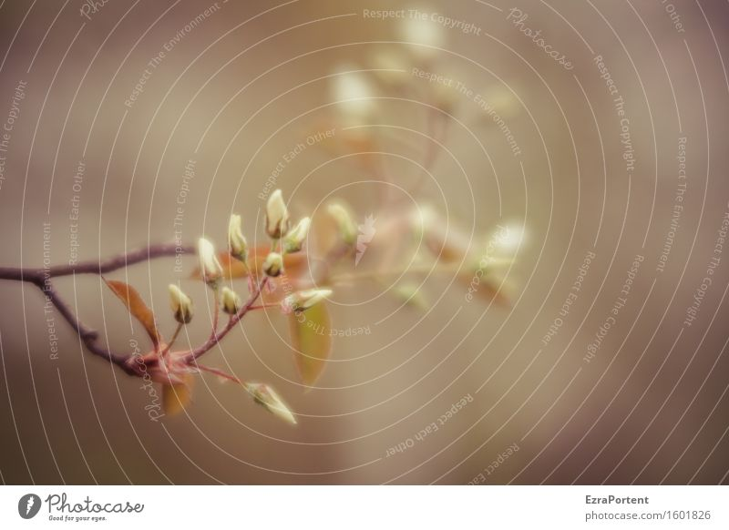 ..... Nature Plant Spring Blossom Blossoming Natural Gray White Branch Blur Delicate Colour photo Subdued colour Exterior shot Close-up Deserted