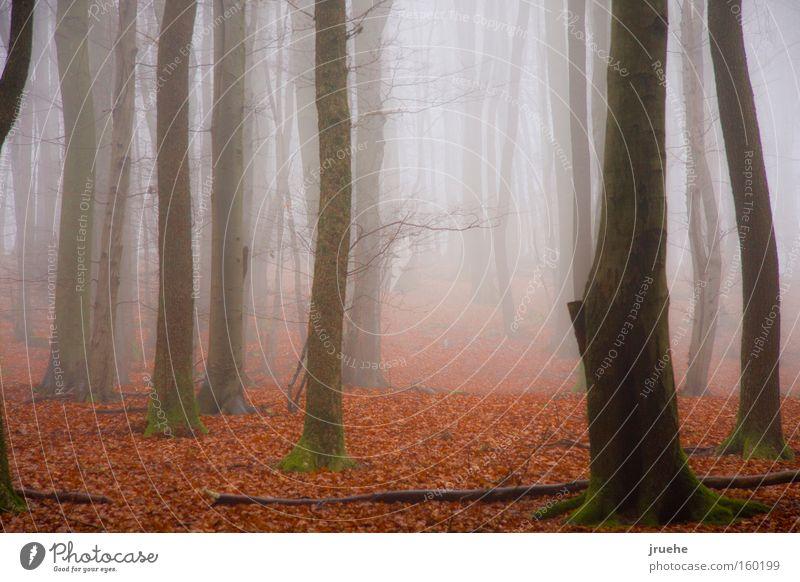 Leaf Fog Winter Calm