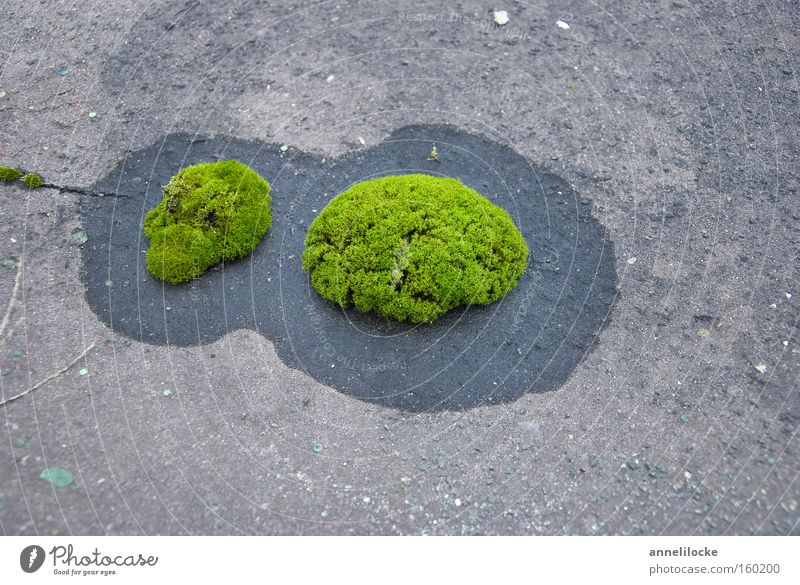 ripe for the island. Island Islands Vacation & Travel Ocean Moss Green Water Fresh Growth Plant Concrete Roof Soft Smooth Circle Stone Hope Success Minerals