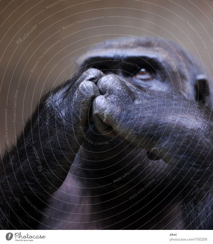 Nutrition Animal Life Meditative Mammal Share Concern Monkeys Stock market Feed Enclosure Look after Basel Financial Crisis Gorilla Apes