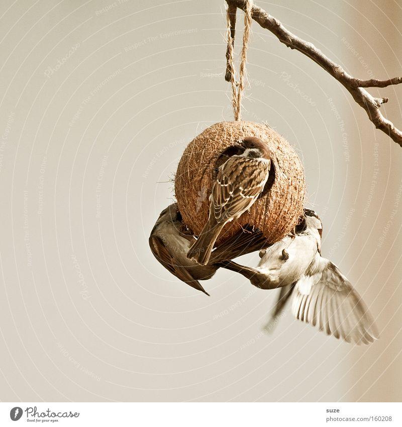 Animal Garden Bird Brown Flying Wild animal Group of animals Feather Wing Twig Hang To feed Smooth Animalistic Feeding