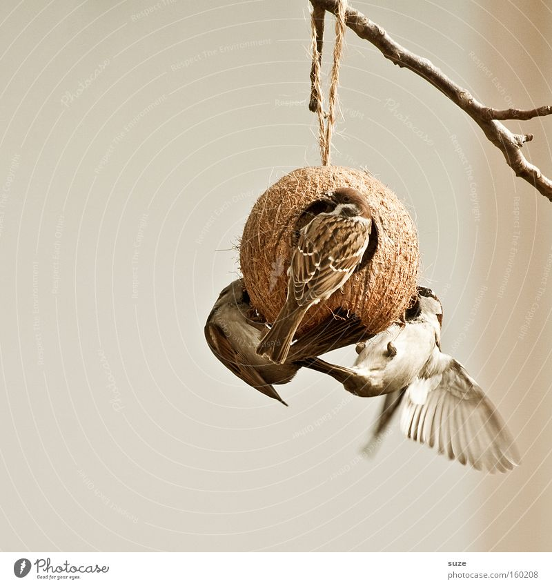 Animal Garden Bird Brown Flying Wild animal Group of animals Feather Wing Twig Hang To feed Smooth Animalistic Feeding