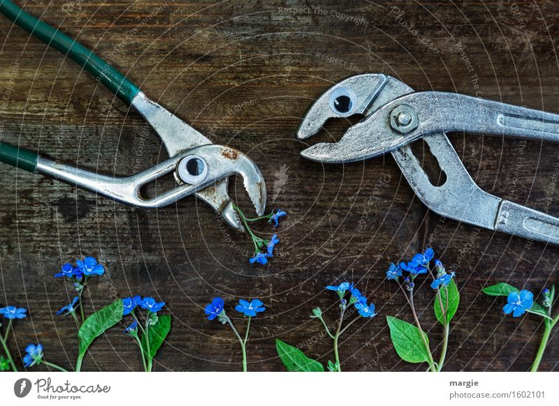 Are you thinking what I'm thinking? Two pincers with eyes and many forget-me-nots - flowers on an old wooden table Craftsperson Gardening Workplace