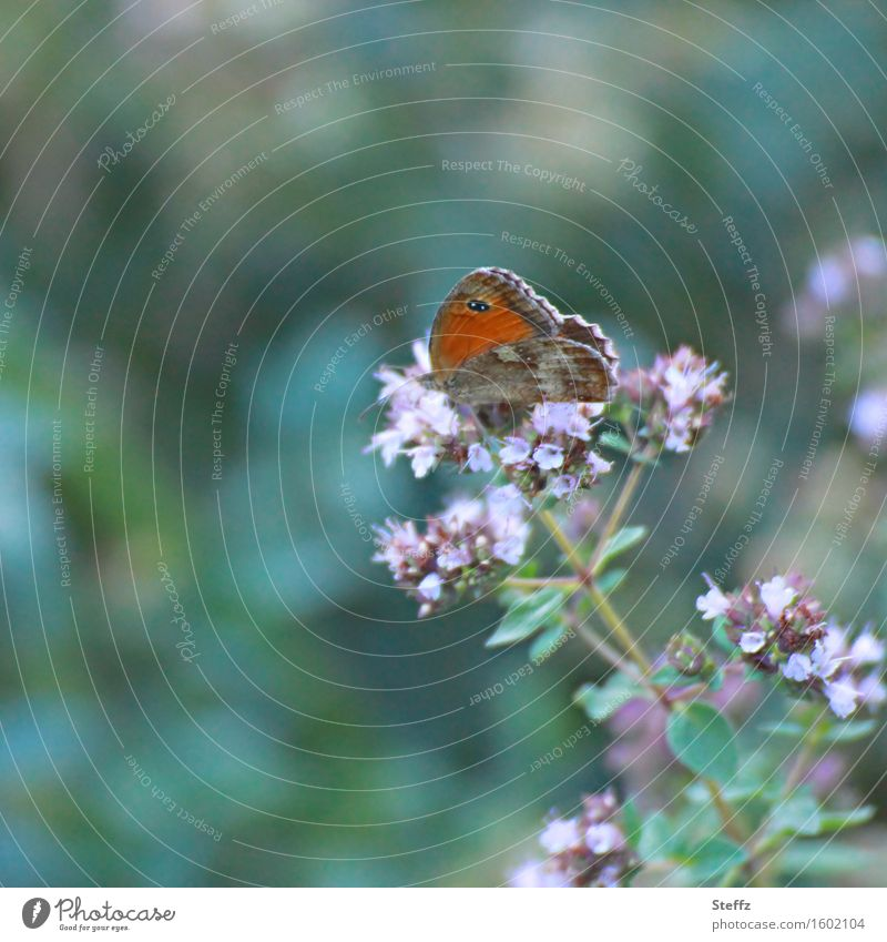summer life Browns Butterfly butterflies Wild plant Forest plant idyllically Idyll Ease Easy Light heartedness Noble butterfly mimicry Dark green Nectar