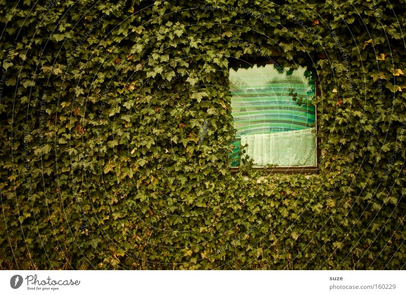 Green Plant Leaf House (Residential Structure) Window Wall (building) Wall (barrier) Flat (apartment) Facade Growth Bushes Insulation Ivy Foliage plant Tendril