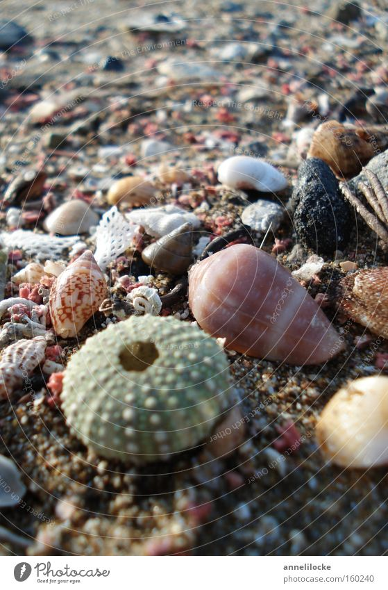 flotsam and jetsam Mussel Sea urchin Stone Beach Sand Vacation & Travel Ocean Island Islands Mediterranean sea Summer Collection Search Find Fish