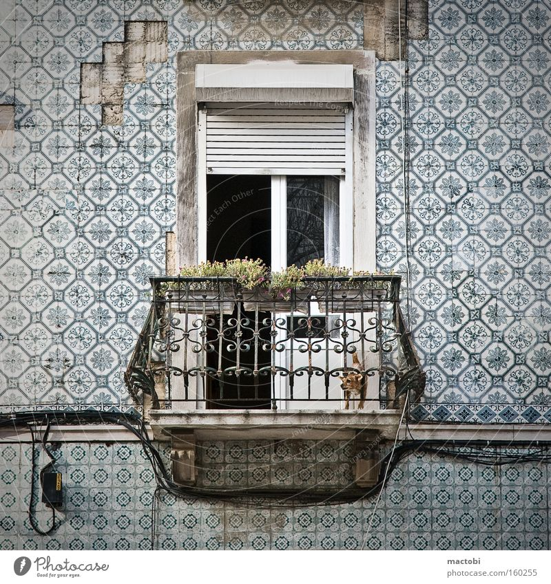 little dog makes big noise Lisbon Portugal Balcony Dog Tile Street Derelict Facade Crash Venetian blinds Detail bark