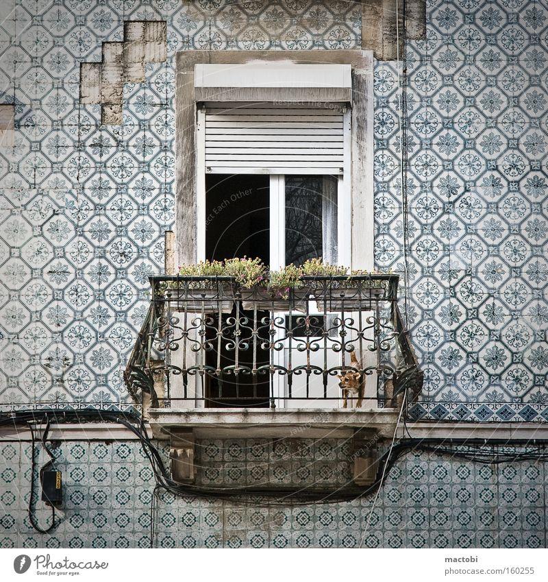 Street Dog Facade Tile Derelict Balcony Noise Portugal Lisbon Crash Venetian blinds