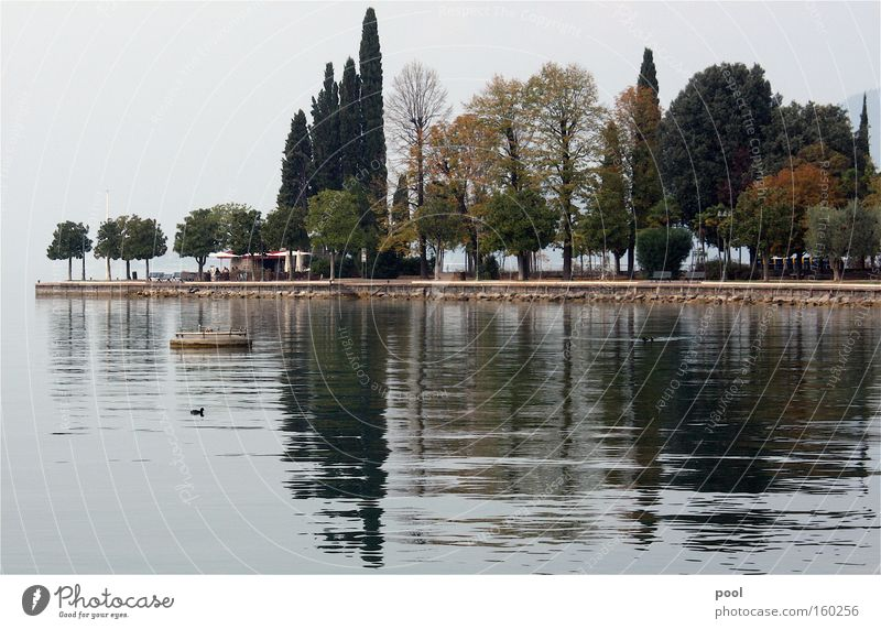lago di garda Lake Garda Reflection Water Waves Fog Morning Promontory Bardolino Autumn Landscape Tree Lakeside Italy