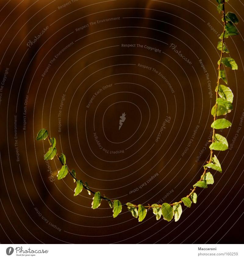 Plant Green Flower Leaf Lamp Branch Fishing (Angle) Household Fern Pot plant