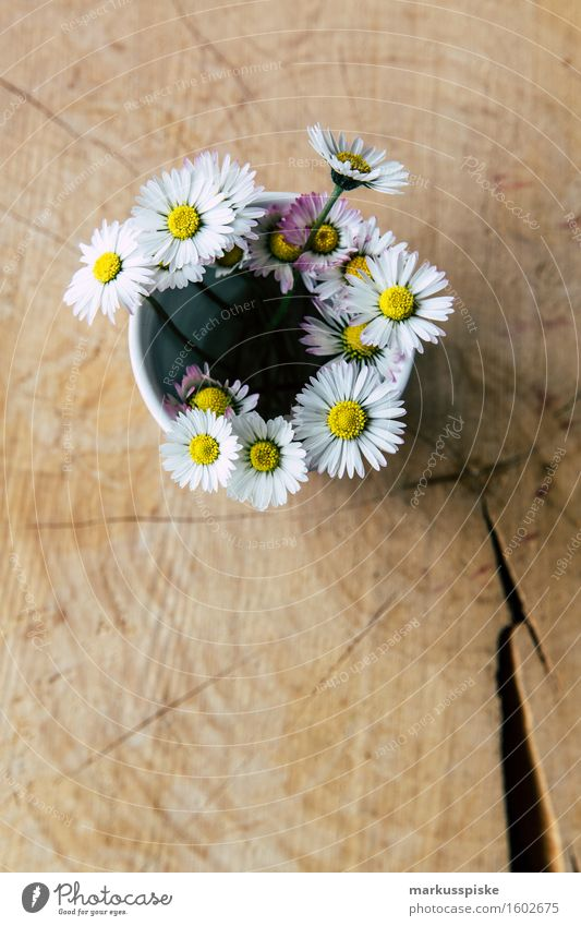 daisy on mother's day Relaxation Fragrance Leisure and hobbies Handicraft Living or residing Mother's Day Flower Blossom Foliage plant Wild plant Daisy Love