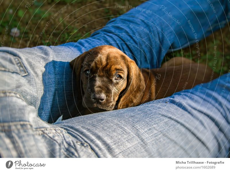 Human being Dog Nature Man Blue Relaxation Animal Adults Baby animal Legs Small Brown Friendship Lie Growth Observe