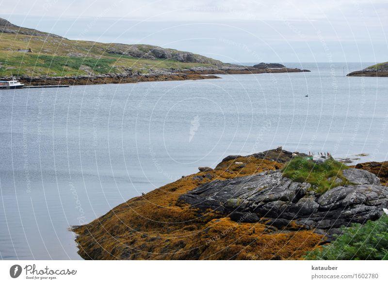seals Landscape Hill Coast Bay Harbour seal Group of animals Lie Scotland Western islands eriskay Rock Algae Ocean Loneliness Gloomy Colour photo Exterior shot