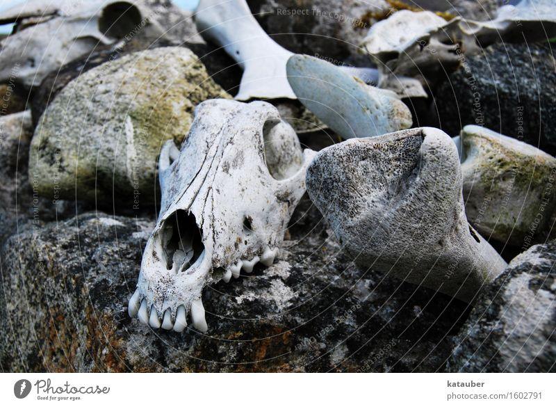 Dark Sadness Wall (barrier) Death Legs Gray Stone Rock Fear Esthetic Grief Teeth End Creepy Sheep Skeleton