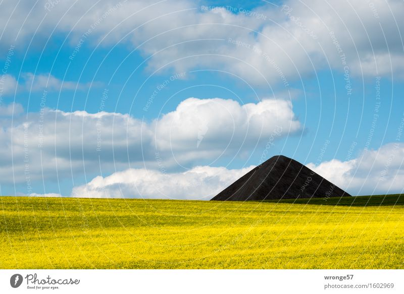 Pointed cone heap of the former copper mining in the Mansfeld district behind a blooming rape field Mining Environment Landscape Sky Clouds spring