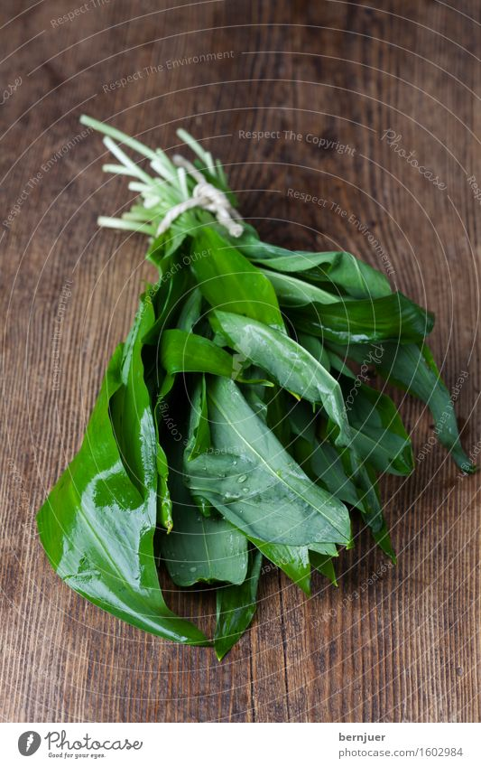 The Bear Leek Food Herbs and spices Water Spring Leaf Wood Lie Fresh Wet Green Wild board federation Ingredients Organic Aromatic Ursinum Holiday season