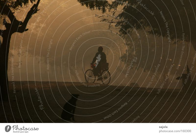 cyclists at dawn Cycling Bicycle Human being Masculine Man Adults 1 Tree Myanmar Asia Transport Means of transport Dog Moody Esthetic Contentment Dusty