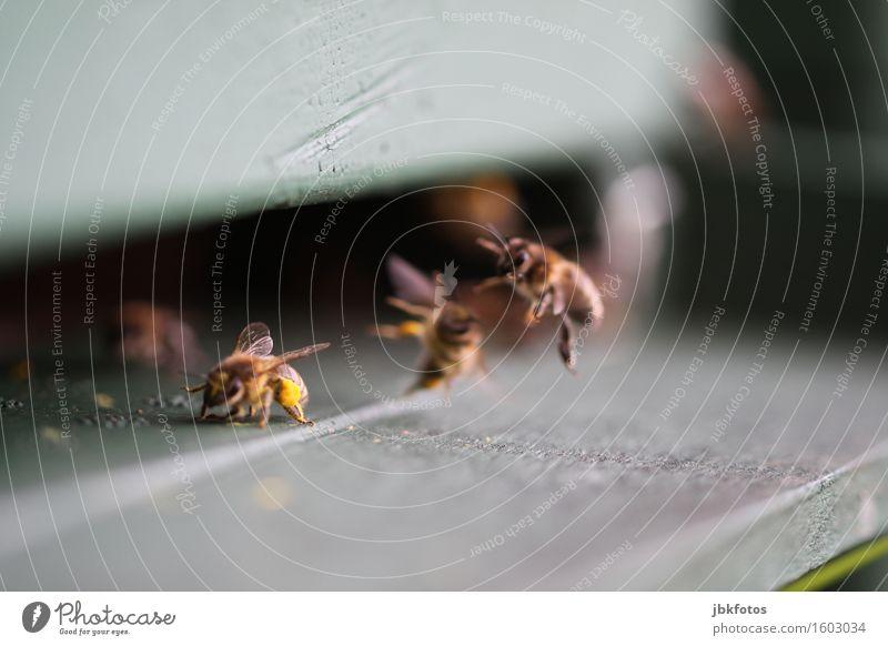 bees Food Nutrition Lifestyle Happy Healthy Leisure and hobbies Environment Nature Animal Bee Flock Esthetic Friendliness Hip & trendy Juicy Beehive Bee-keeping