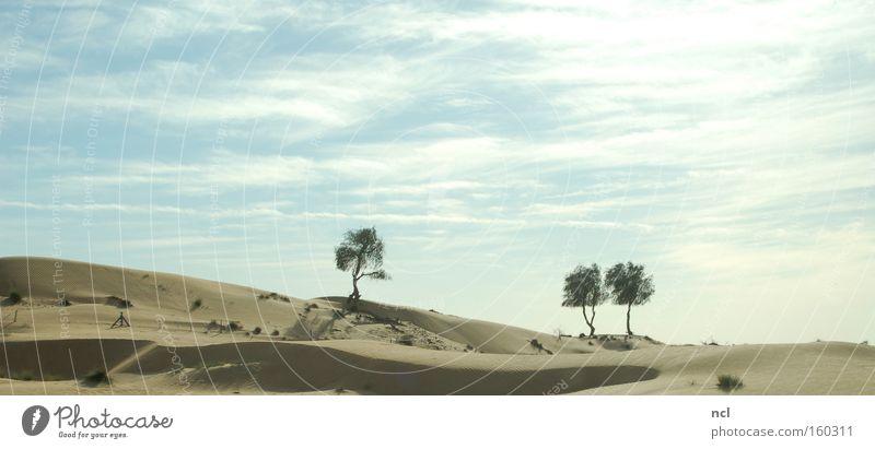Sky Tree Sun Landscape Far-off places Sand Earth Infinity Asia Desert Hot Derelict Bleak Drought Near and Middle East Dubai
