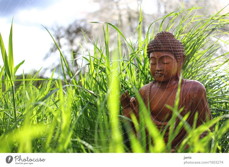 Human being Calm Meadow Grass Religion and faith Wood Contentment Sit Belief Serene Meditation Figure Prayer Optimism Willpower Patient