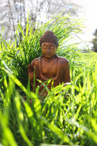 Buddha 1 Human being Beautiful weather Plant Grass Garden Meadow Decoration Wood Sit Optimism Caution Serene Patient Calm Self Control Hope Belief Life