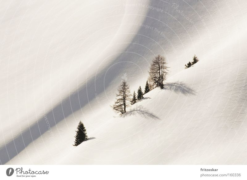 White Tree Loneliness Winter Mountain Snow Diagonal Smooth Incline