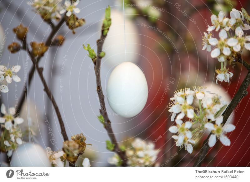 Easter Egg Feasts & Celebrations Blue Gray Green Red Black White Firm Easter egg nest Twig Blossom easter tree Blossoming Multicoloured Colour photo