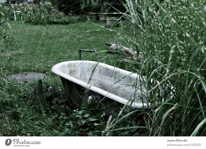 Water Garden Dirty Wellness Bathroom Clean Dry Bathtub Agriculture Irrigation Feral