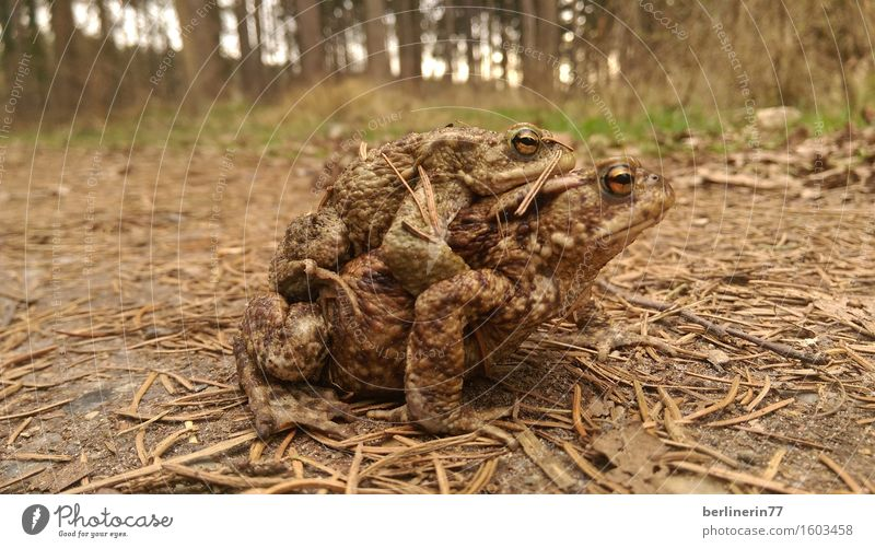 ...connected... Animal Frog 2 Pair of animals Rutting season Touch Carrying Exceptional Authentic Contentment Spring fever Trust Safety (feeling of) Agreed