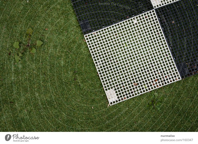 Square meets artificial turf v.s. dandelion Corner Playing Lawn Grass surface Artificial lawn Plastic Unnatural Playground Reticular Dandelion Nature Fight