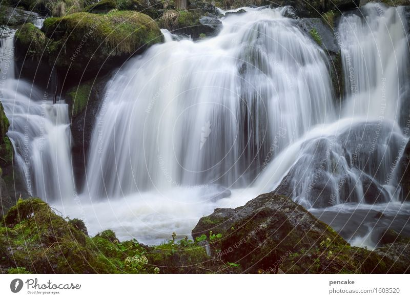 triberg Nature Landscape Elements Water Spring Forest Rock Waterfall Triberg Esthetic Famousness Fresh Together Beautiful Hissing Long exposure Vigor Tourism