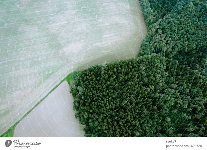 Top Field Forest Flying Tall Above Brown Green Fear of heights Balloon flight Edge of the forest Margin of a field Lined Structures and shapes Aerial photograph