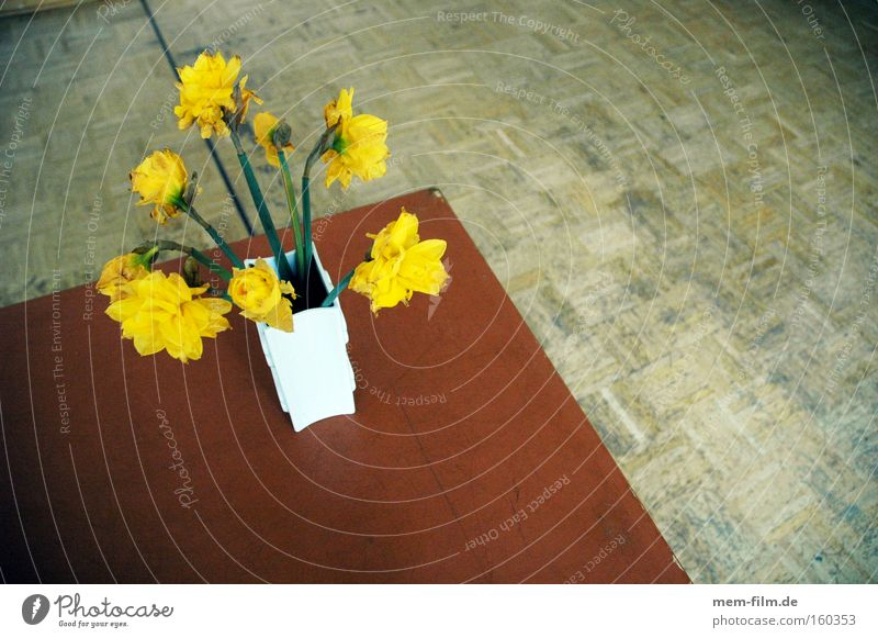 daffodils Narcissus Yellow Wild daffodil Table Vase flowers spring spring greeting