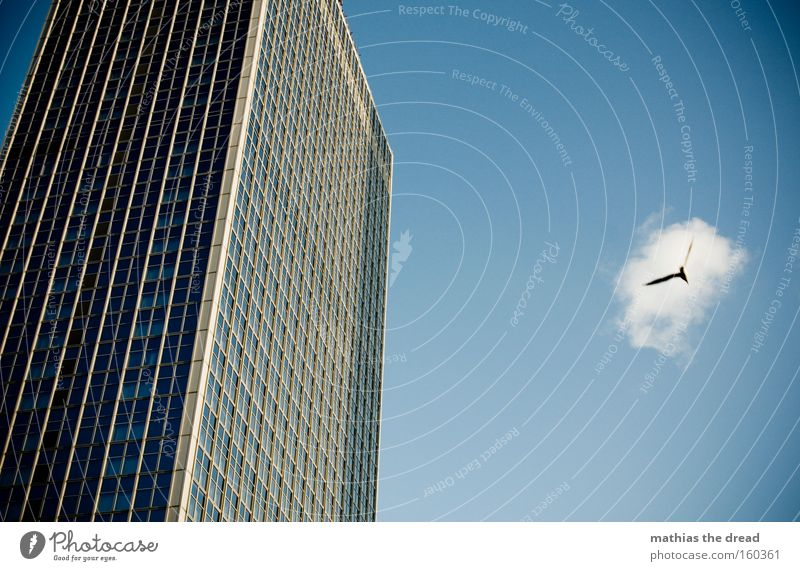 a bird comes flying Bird Flying Habitat Animal High-rise Tall Large Blue Sky Majestic Window Facade Line Pane Aviation