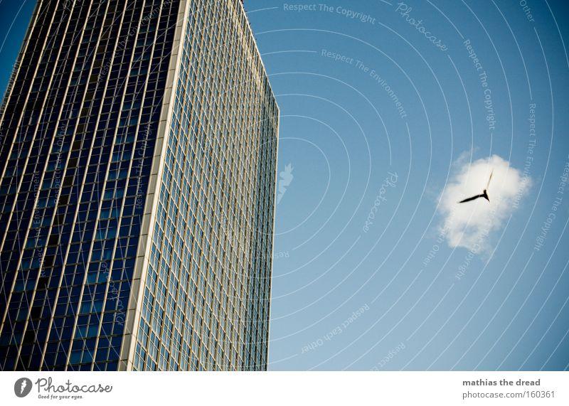 Sky Blue Animal Window Line Bird Flying Facade Tall High-rise Large Aviation Pane Majestic Habitat