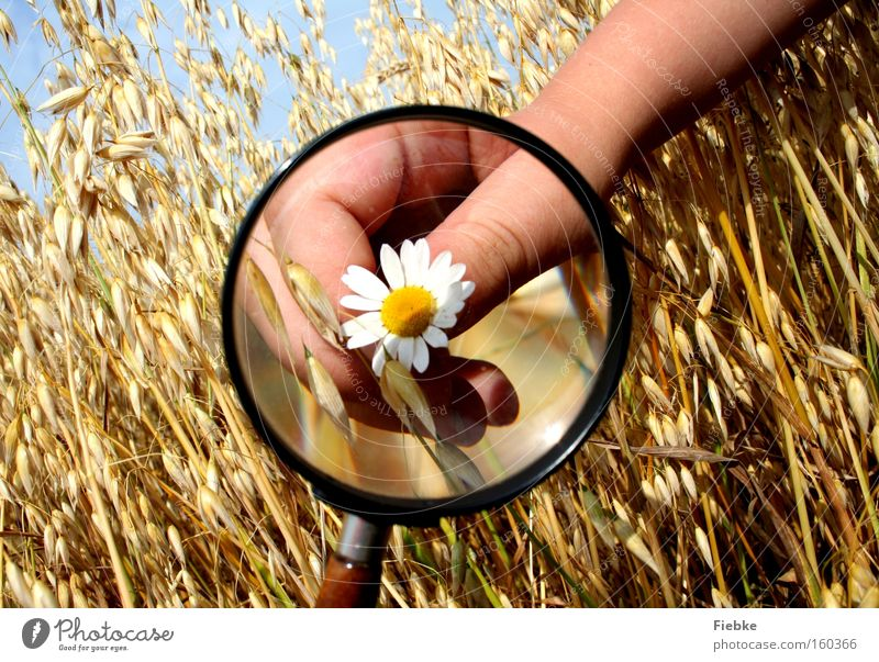 naturalists Magnifying glass Flower Grain Field Summer Hand Fingers Daisy Scientist Nature Joy Interest Curiosity Investigate Science & Research Agriculture