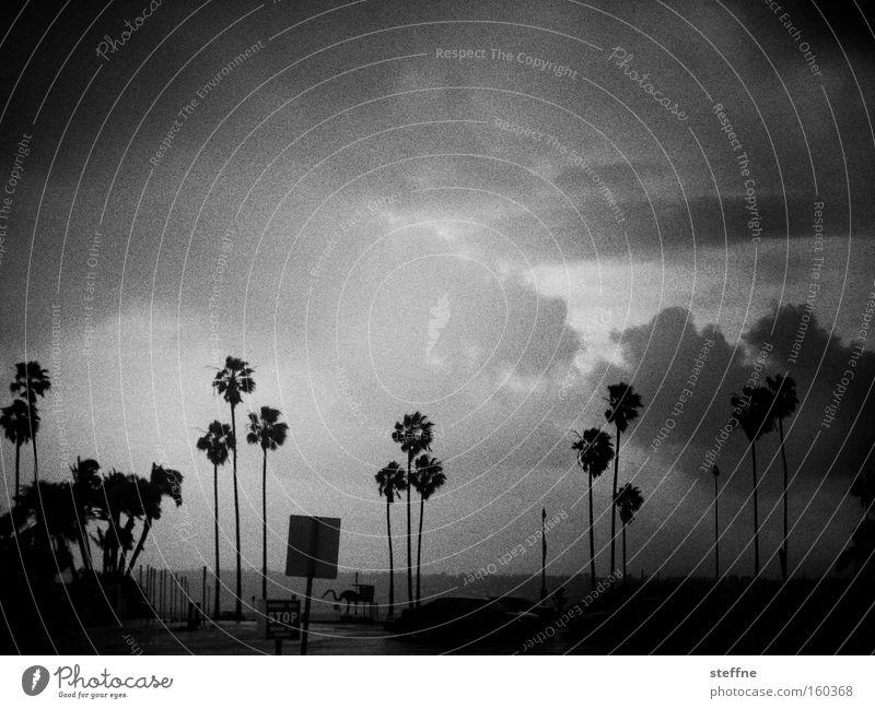 Beach Clouds Rain Coast Wind Thunder and lightning Palm tree Storm Comfortless Thunder
