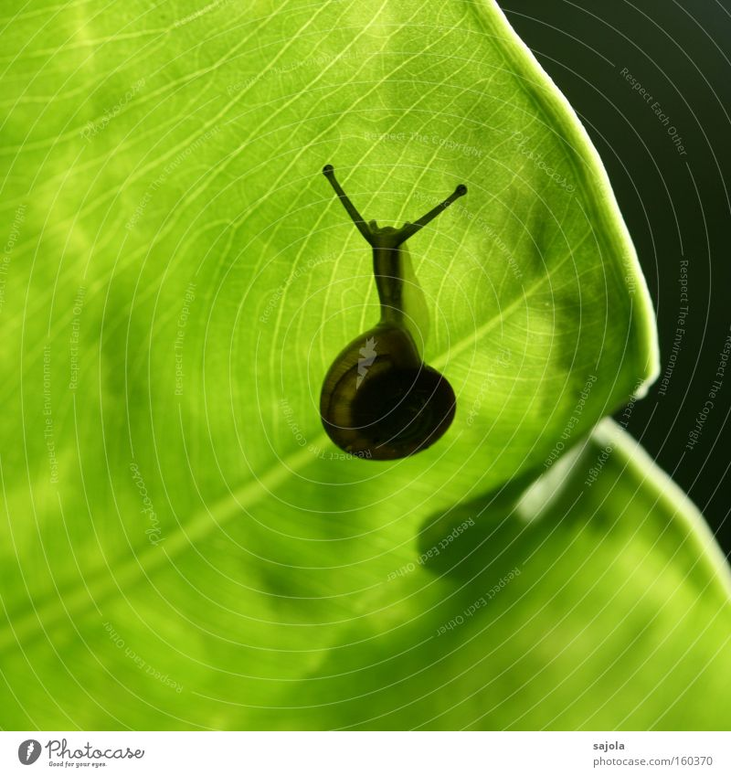 Green Plant Leaf Animal Esthetic Snail Feeler Patient Slowly Slimy Botanical gardens