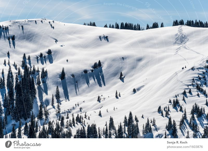 Sky Nature Tree Landscape Far-off places Winter Mountain Environment Snow Freedom Beautiful weather Break Hill Smooth Ski tracks