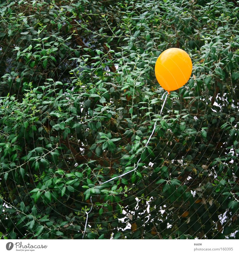 Tree Loneliness Yellow Air Feasts & Celebrations Infancy Flying Birthday Aviation Decoration Balloon Blow Claustrophobia Rubber Bursting Illness