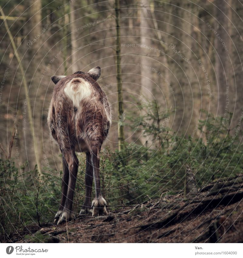 Good bye, my deer! Nature Plant Animal Spring Tree Forest Wild animal Reindeer Deer 1 Going Brown Green Hind quarters Colour photo Multicoloured Exterior shot